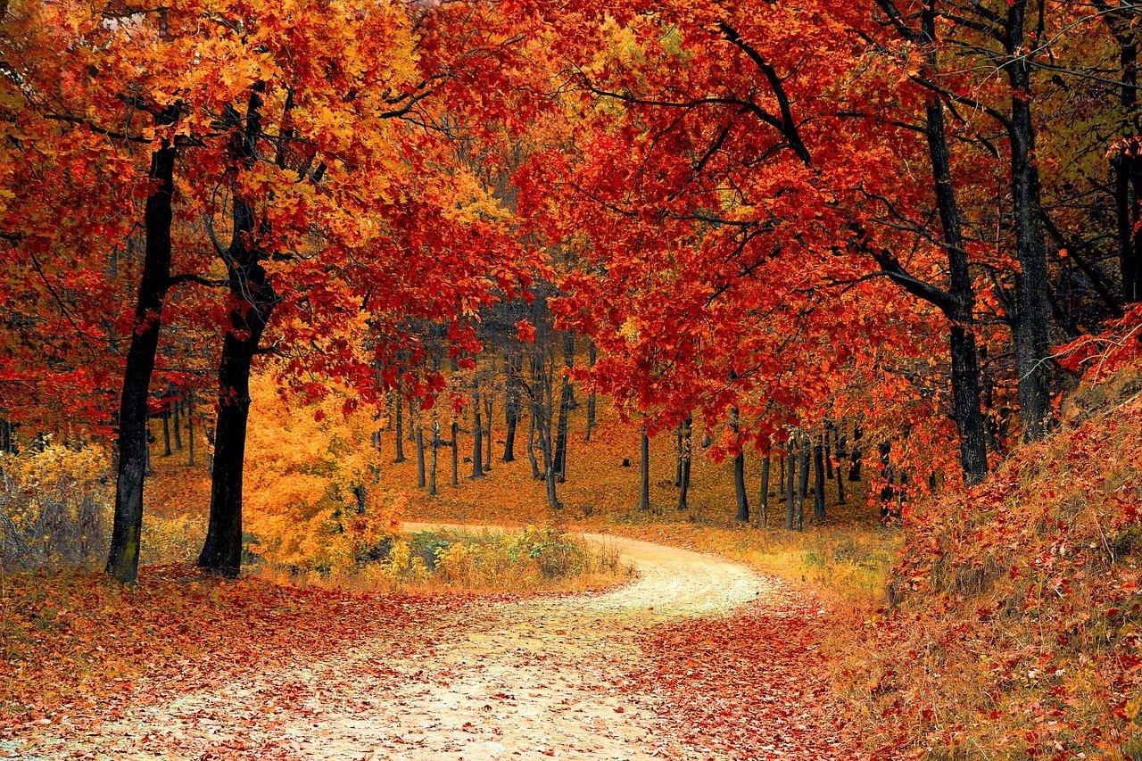 cathymazzola.best-automne