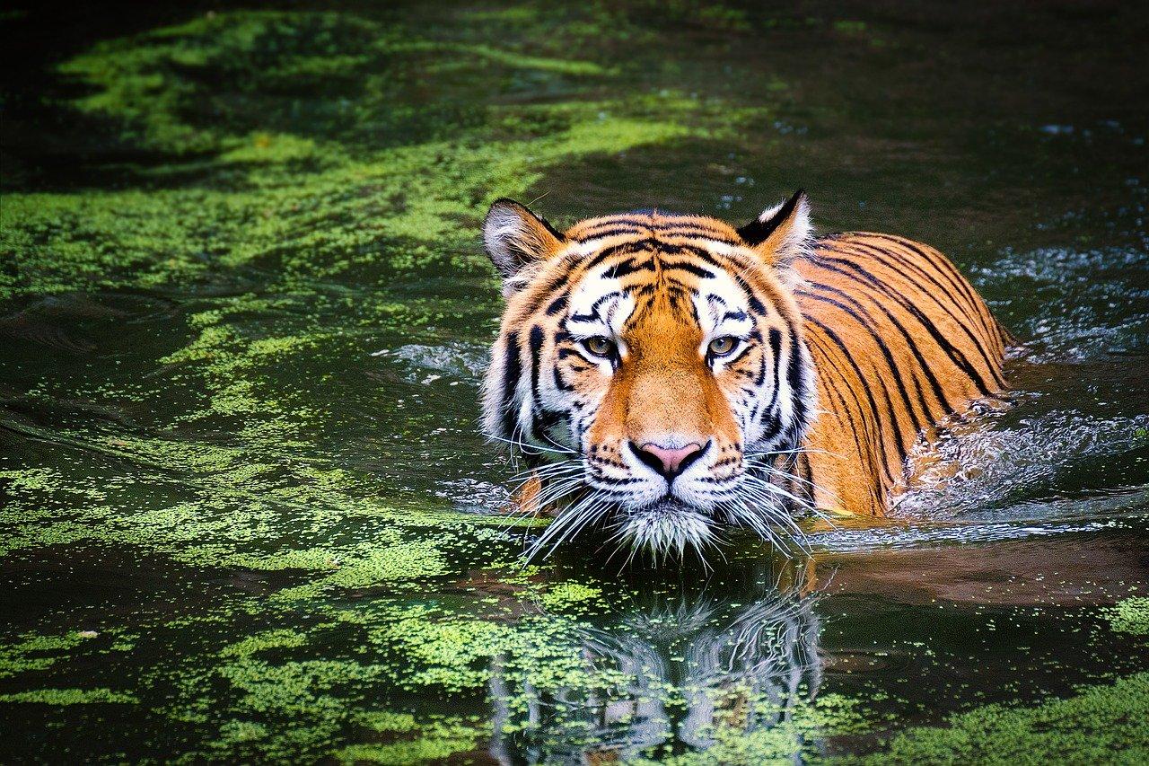 cathymazzola.best-tigre